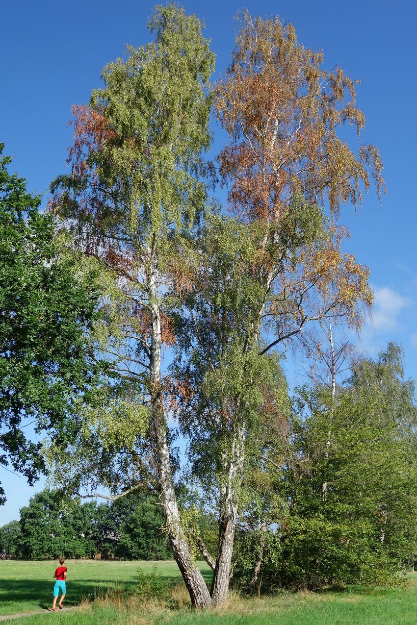 Anfrage: Klimabedingtes Waldsterben in Obertshausen